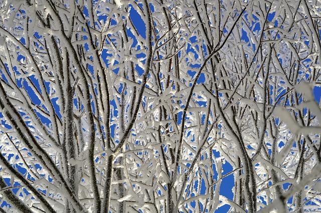 tree-1959272_640